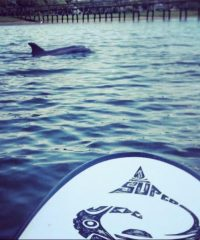 Stand Up Paddle Company